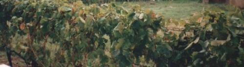 medjugorje-traubenscan-160920-0001